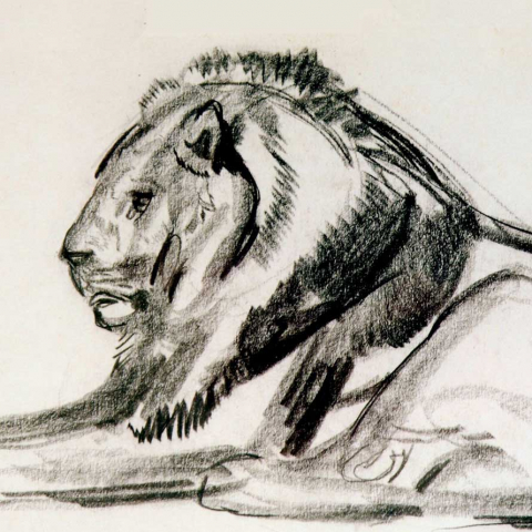 Lion couché.